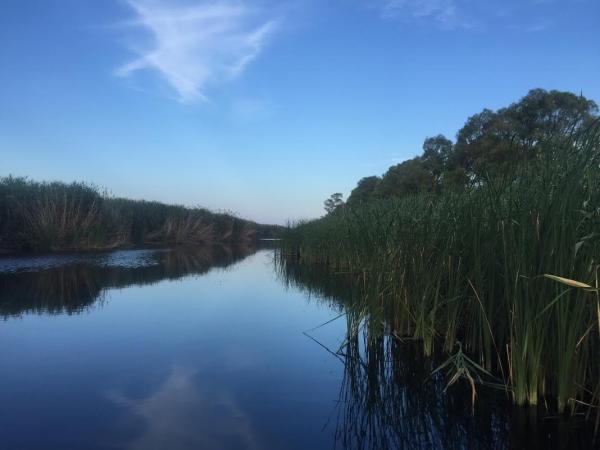 Ente Parco del Gargano ed e-distribuzione insieme per le cicogne bianche di Oasi Lago Salso.