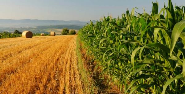 Regione/ Aziende agricole c'è la graduatoria per i contributi della misura 4.1