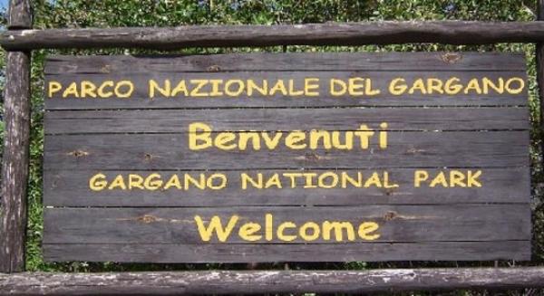 """Parco/ Il Gargano brucia/ Costanzucci: """"Una brutta ferita che si riapre"""""""