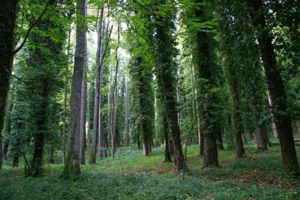 Le «faggete» della Foresta Umbra integre dal punto di vista ecologico. Le motivazioni Unesco dopo l'ammissione