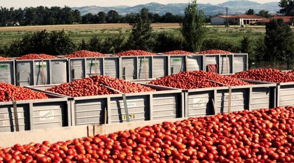 Coldiretti Puglia premia il Pomodoro Made in Capitanata