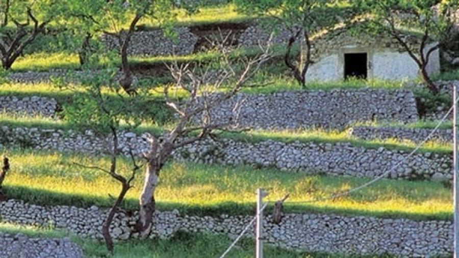 Giornata del paesaggio sul gargano tra giardini di agrumi - Terrazzamenti giardino ...