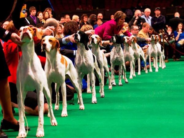 Foggia/ Domenica in Fiera, arriveranno da tutta Italia e dall'estero 800 cani di razza alla 56° esposizione