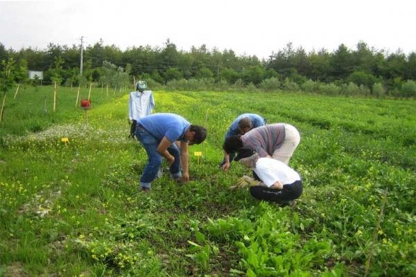 """Lavoro agricolo, a Foggia le """"nuove"""" assunzioni. Il governo autorizza forme di sperimentazione"""