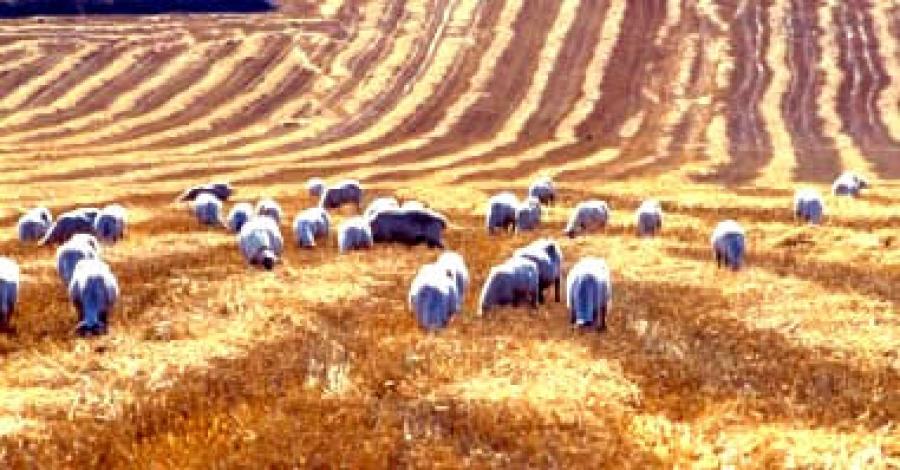 Giuseppe palmieri sull 39 agricoltura e la pastorizia del tavoliere del settecento ondaradio - Il tavoliere delle puglie ...