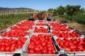 Regione Puglia contro Igp pelato Napoli La Regione Puglia esprimerà parere negativo alla richiesta di registrazione